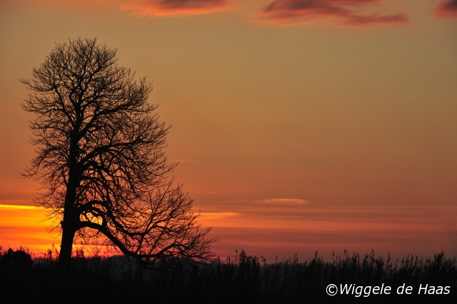 Kastanje met Zonsondergang