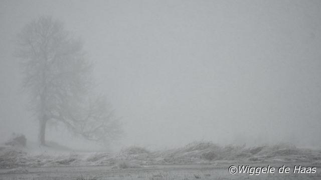Sneeuw storm