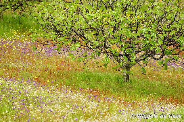 Onder de vijgeboom