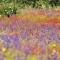 Regenboog landschap