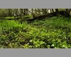 Voorjaar in de biesbosch