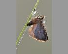 Nachtvlindertje