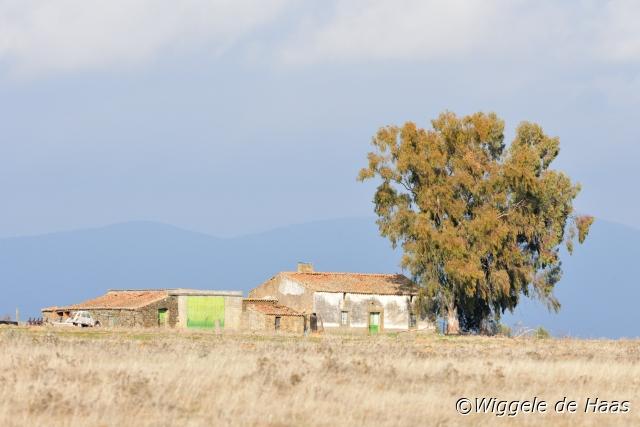 Boerderij in landschap