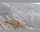 Poedersneeuw