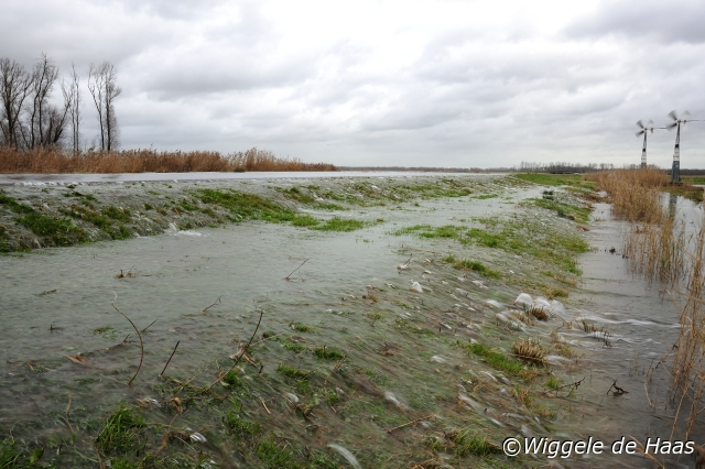 De polder Eierwaard loopt vol