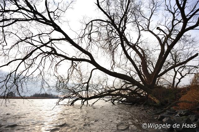 Boom aan de rivier