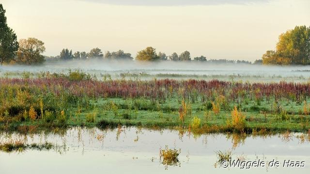 Mistige kleurrijke ochtend